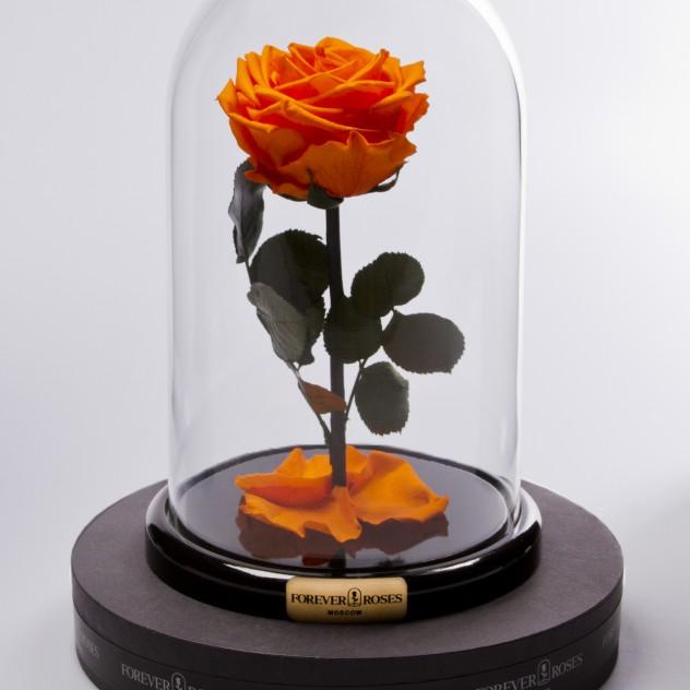 Роза в колбе мини Оранжевая