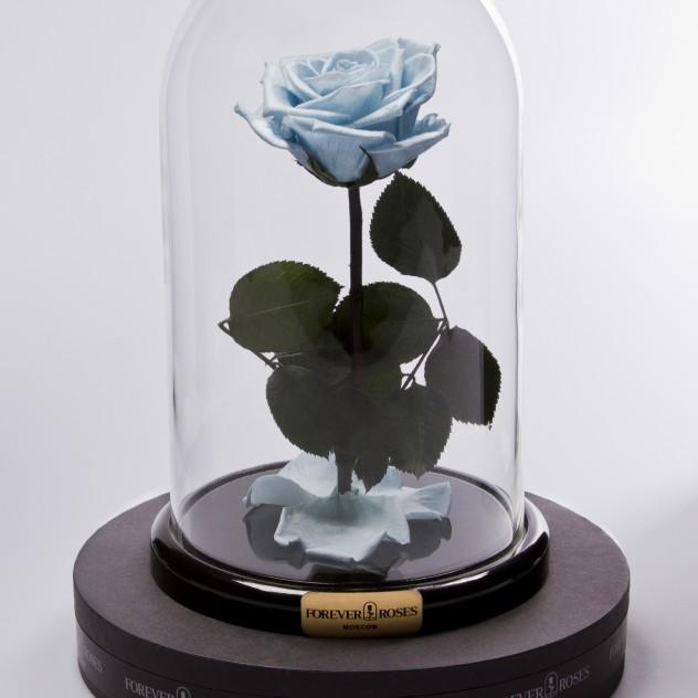 Роза в колбе мини голубая