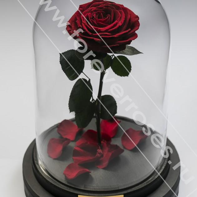 Роза в колбе Premium Бордовый