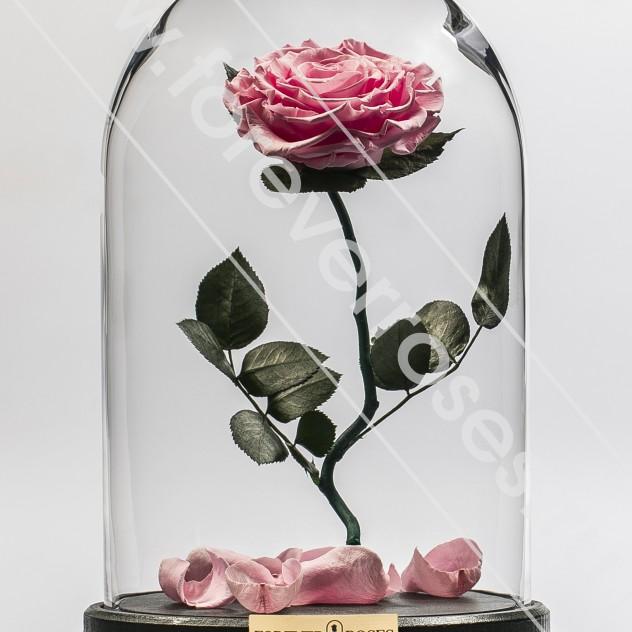 Роза на изогнутом стебле Розовая