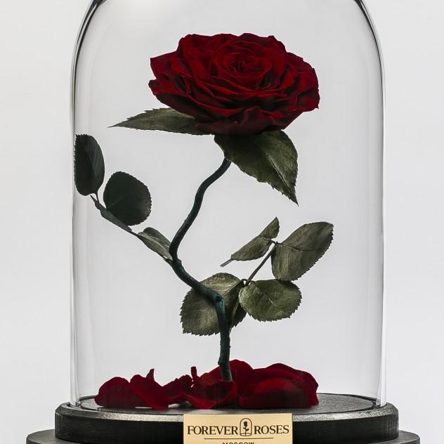 Роза на изогнутом стебле Бордовая