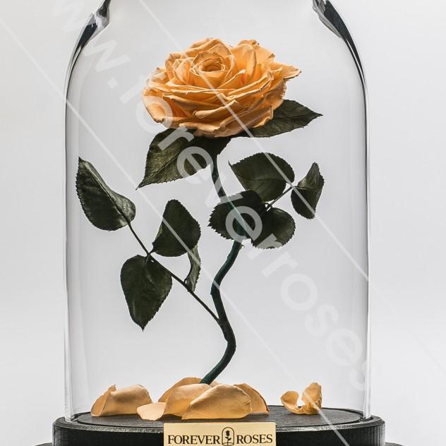 Роза на изогнутом стебле Персик