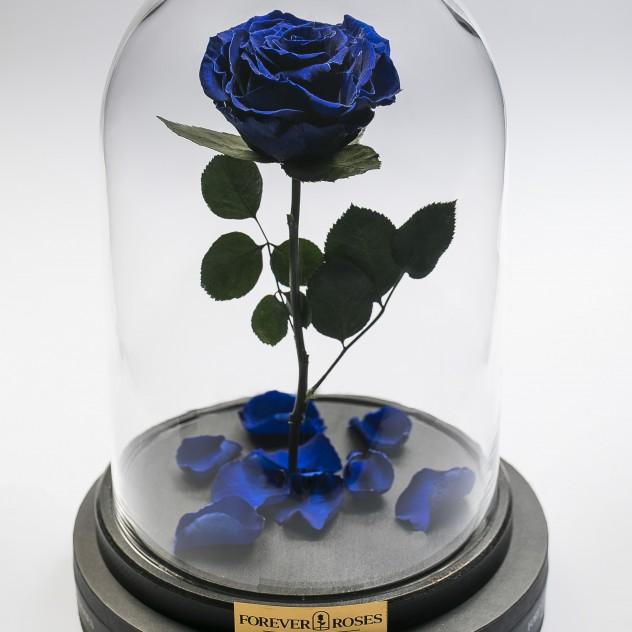 Роза в колбе мини Синий