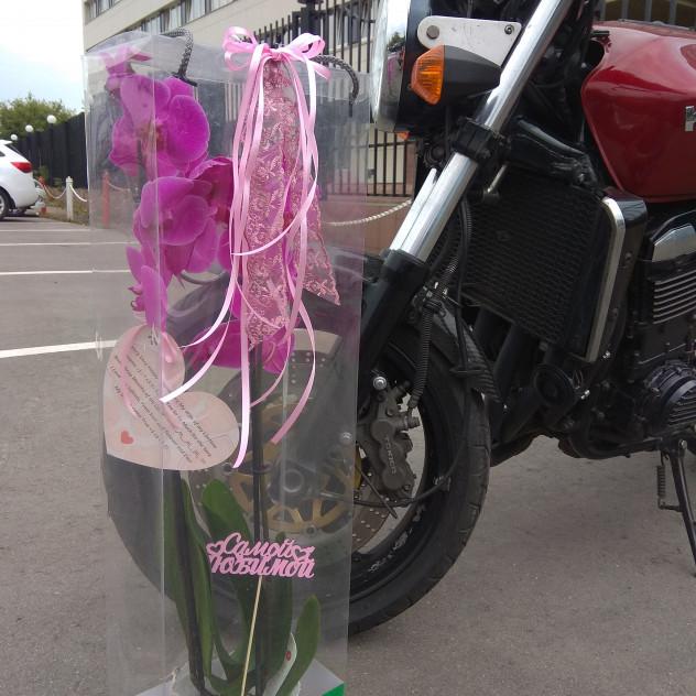 Орхидея для любимой!