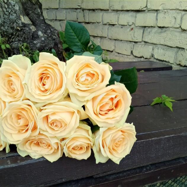 Букет из 11 персиковых роз