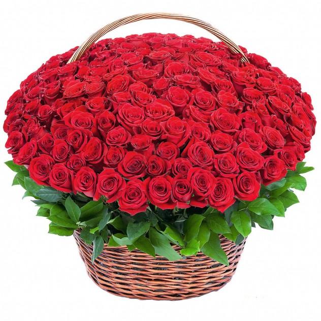 151 Элитная Роза