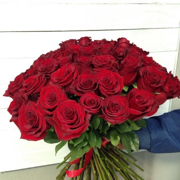 51 Rosa Ecuador