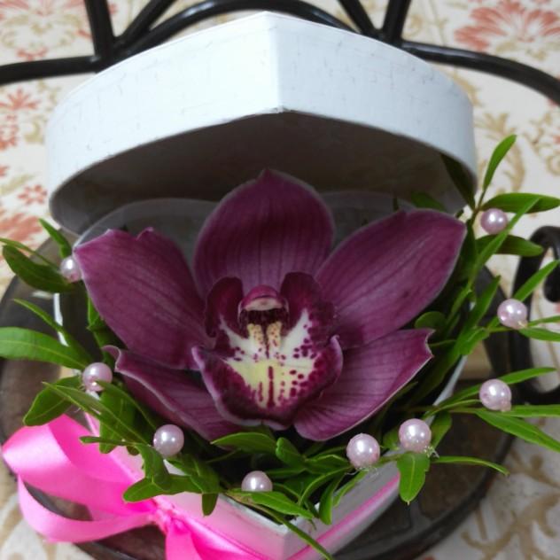 великолепная орхидея