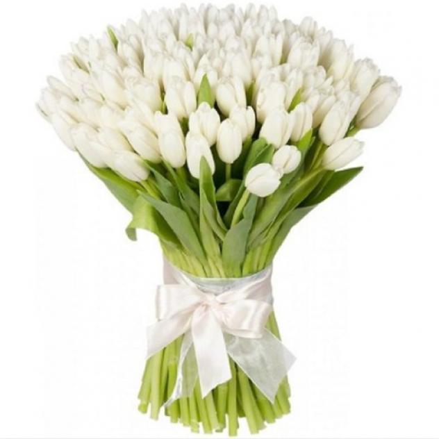 Букет из 67 белого тюльпана