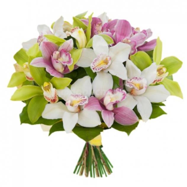 19 Радужных орхидей