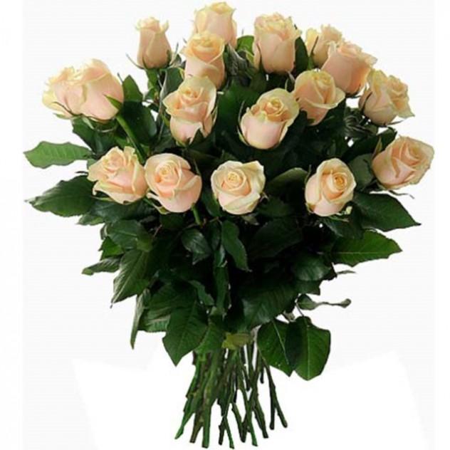 Cream roses bouquet 15 pcs.