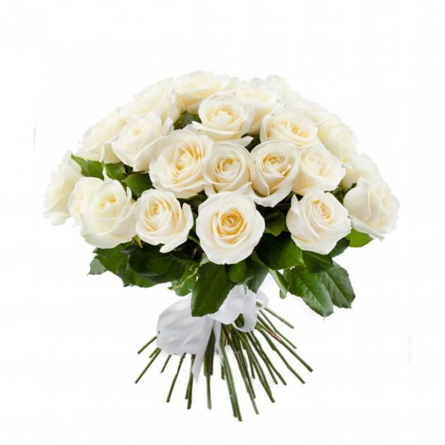 51 white rose 40 cm
