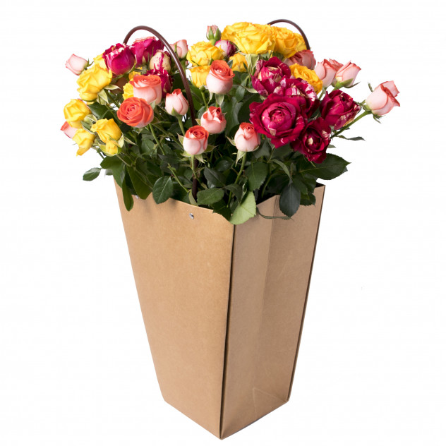 Shrub roses in package No. 2