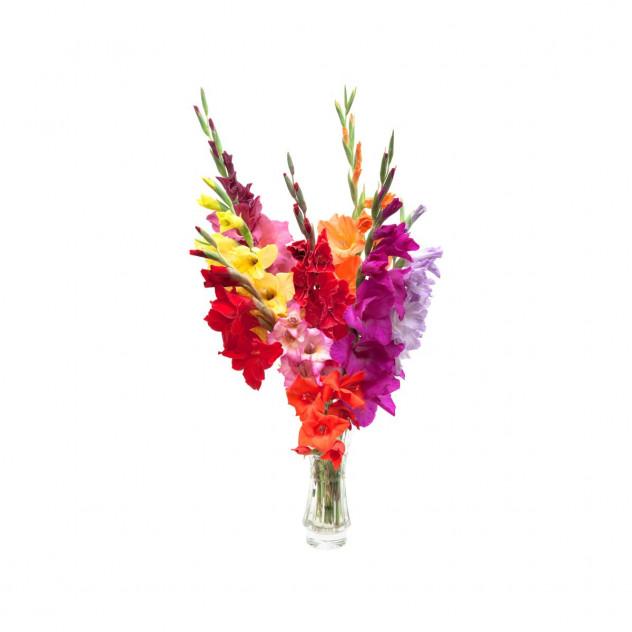 Bouquet of gladioli number 3