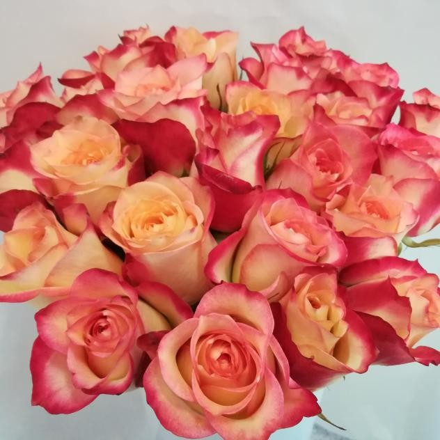 Bouquet of bewitching 11 roses