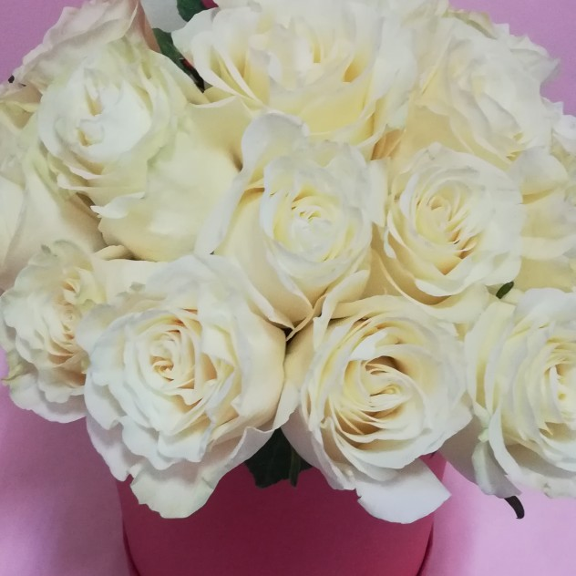White rose in a hat box