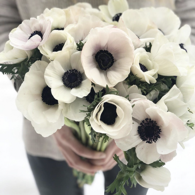 Li-anemone tse 35