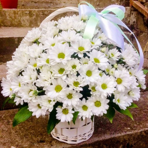 33 Chrysanthemums in a basket