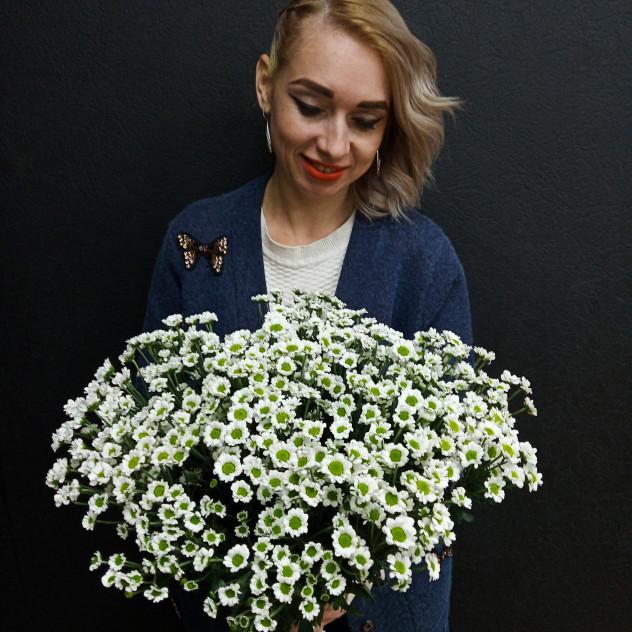 Daisies daisies ...